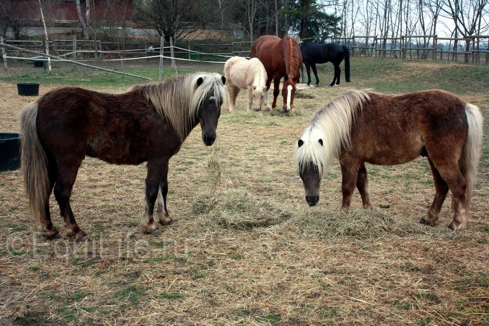 Просто о качестве сена - фото 153_wm, главная Рацион Содержание лошади , конный журнал EquiLIfe