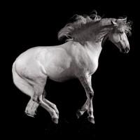 Антуан Бассале (Antoine Bassaler) - фото 1546350_258218314336394_1567146527_n-200x200, главная Разное Фото , конный журнал EquiLIfe