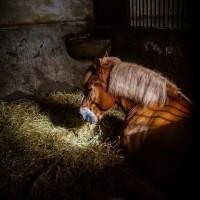 Антуан Бассале (Antoine Bassaler) - фото 1956937_263163120508580_343646752_o-200x200, главная Разное Фото , конный журнал EquiLIfe