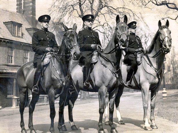 Лошади-герои - фото AAnimalheroes6, главная Конные истории Новости Разное , конный журнал EquiLIfe