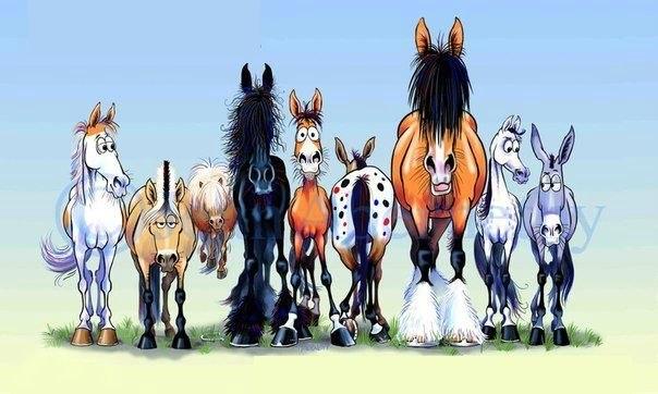 Кони разные важны, кони разные нужны - фото FergusTheHorsefre, главная Интересное о лошади Разное , конный журнал EquiLIfe