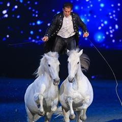 Эквитана раскрыла имена HOT-TOP-SHOW 2015 - фото Lorenzo, главная Новости Разное , конный журнал EquiLIfe