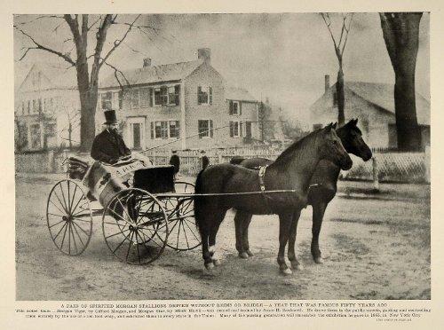 История безжелезной езды: до нашей эры и сегодня - фото VNHAdgGYS0s, главная Конные истории Разное , конный журнал EquiLIfe