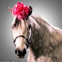 Лошади в шляпках - фото article-0-1CCC4E1600000578-493_634x625-200x200, главная Разное Фото , конный журнал EquiLIfe