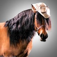 Лошади в шляпках - фото article-0-1CCC4F1E00000578-838_634x580-200x200, главная Разное Фото , конный журнал EquiLIfe