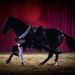 Эквитана раскрыла имена HOT-TOP-SHOW 2015 - фото ecurie-hastaluego, главная Новости Разное , конный журнал EquiLIfe