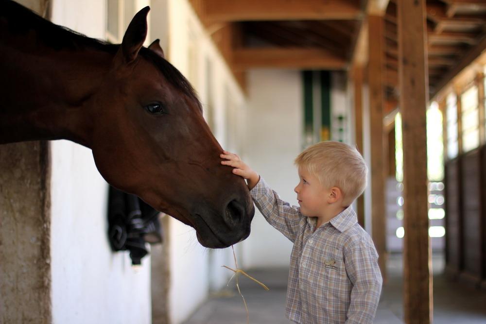 Клуб постоянных читателей - фото f-091-копия, , конный журнал EquiLIfe