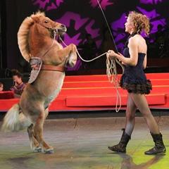 Эквитана раскрыла имена HOT-TOP-SHOW 2015 - фото philippot, главная Новости Разное , конный журнал EquiLIfe