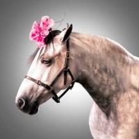 Лошади в шляпках - фото rosie-olivia-millinery-for-aintree-grand-national-2014-03-200x200, главная Разное Фото , конный журнал EquiLIfe