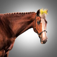 Лошади в шляпках - фото rosie-olivia-millinery-for-aintree-grand-national-2014-04-200x200, главная Разное Фото , конный журнал EquiLIfe