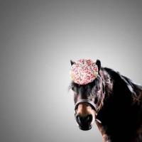Лошади в шляпках - фото rosie-olivia-millinery-for-aintree-grand-national-2014-07-200x200, главная Разное Фото , конный журнал EquiLIfe
