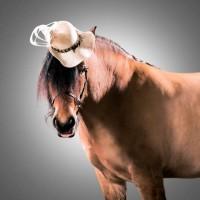 Лошади в шляпках - фото rosie-olivia-millinery-for-aintree-grand-national-2014-081-200x200, главная Разное Фото , конный журнал EquiLIfe