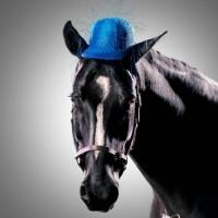 Лошади в шляпках - фото rosie-olivia-millinery-for-aintree-grand-national-2014-09-200x200, главная Разное Фото , конный журнал EquiLIfe