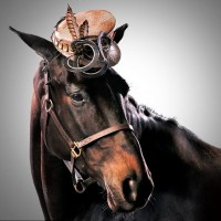 Лошади в шляпках - фото rosie-olivia-millinery-for-aintree-grand-national-2014-10-200x200, главная Разное Фото , конный журнал EquiLIfe