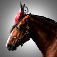 Лошади в шляпках - фото rosie-olivia-millinery-for-aintree-grand-national-2014-11-200x200, главная Разное Фото , конный журнал EquiLIfe