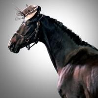 Лошади в шляпках - фото rosie-olivia-millinery-for-aintree-grand-national-2014-12-200x200, главная Разное Фото , конный журнал EquiLIfe