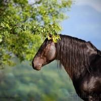 Юлия Удовенко. Выставка конных портретов - фото 10954136_1596700100542169_468458689_n_wm-200x200, главная Разное События Фото , конный журнал EquiLIfe