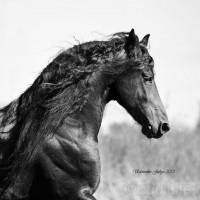 Юлия Удовенко. Выставка конных портретов - фото 10965367_1596700090542170_1462404930_n_wm-200x200, главная Разное События Фото , конный журнал EquiLIfe