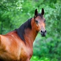 Юлия Удовенко. Выставка конных портретов - фото 10966995_1596700087208837_1034396315_n_wm-200x200, главная Разное События Фото , конный журнал EquiLIfe