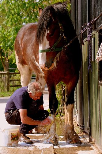 Чистка лошади - фото Grooming-Good, Skin Care главная Здоровье лошади Содержание лошади , конный журнал EquiLIfe