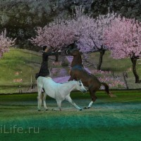 """Фоторепортаж: EQUITANA 2015 - HOP-TOP-SHOW """"Amirando"""" - фото IMG_9163_новый-размер_wm-200x200, главная Разное Фото , конный журнал EquiLIfe"""