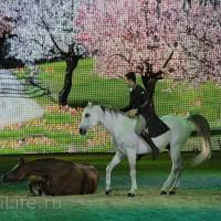 """Фоторепортаж: EQUITANA 2015 - HOP-TOP-SHOW """"Amirando"""" - фото IMG_9174_новый-размер_wm-200x200, главная Разное Фото , конный журнал EquiLIfe"""
