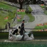 """Фоторепортаж: EQUITANA 2015 - HOP-TOP-SHOW """"Amirando"""" - фото IMG_9193_новый-размер_wm-200x200, главная Разное Фото , конный журнал EquiLIfe"""