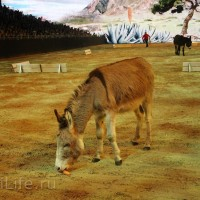 """Фоторепортаж: EQUITANA 2015 - HOP-TOP-SHOW """"Amirando"""" - фото IMG_9256_новый-размер_wm-200x200, главная Разное Фото , конный журнал EquiLIfe"""