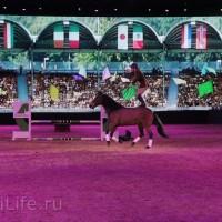 """Фоторепортаж: EQUITANA 2015 - HOP-TOP-SHOW """"Amirando"""" - фото IMG_9391_новый-размер_wm-200x200, главная Разное Фото , конный журнал EquiLIfe"""