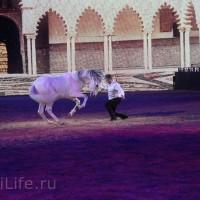 """Фоторепортаж: EQUITANA 2015 - HOP-TOP-SHOW """"Amirando"""" - фото IMG_9506_новый-размер_wm-200x200, главная Разное Фото , конный журнал EquiLIfe"""