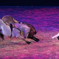 """Фоторепортаж: EQUITANA 2015 - HOP-TOP-SHOW """"Amirando"""" - фото IMG_9530_новый-размер_wm-200x200, главная Разное Фото , конный журнал EquiLIfe"""