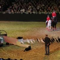 """Фоторепортаж: EQUITANA 2015 - HOP-TOP-SHOW """"Amirando"""" - фото IMG_9605_новый-размер_wm-200x200, главная Разное Фото , конный журнал EquiLIfe"""