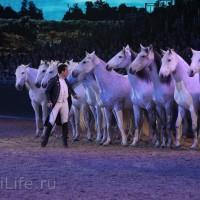 """Фоторепортаж: EQUITANA 2015 - HOP-TOP-SHOW """"Amirando"""" - фото IMG_9911_новый-размер_wm-200x200, главная Разное Фото , конный журнал EquiLIfe"""
