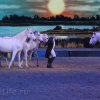 """Фоторепортаж: EQUITANA 2015 - HOP-TOP-SHOW """"Amirando"""" - фото IMG_9925_новый-размер_wm-200x200, главная Разное Фото , конный журнал EquiLIfe"""