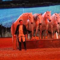 """Фоторепортаж: EQUITANA 2015 - HOP-TOP-SHOW """"Amirando"""" - фото IMG_9971_новый-размер_wm-200x200, главная Разное Фото , конный журнал EquiLIfe"""