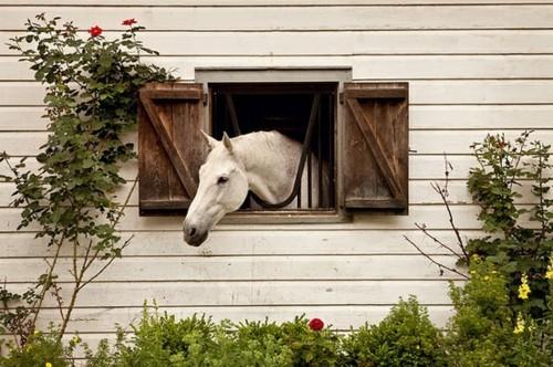 Основные требования к безопасности и микроклимату на конюшне - фото large, главная Здоровье лошади Конюшня Содержание лошади , конный журнал EquiLIfe
