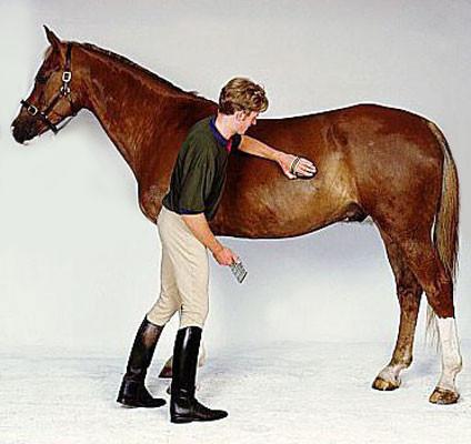 Чистка лошади - фото remote_image_1326198660, Skin Care главная Здоровье лошади Содержание лошади , конный журнал EquiLIfe