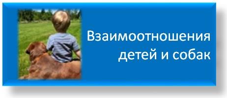 """Софья Баскина: """"Мне интересна личность животного"""" - фото -детей-и-собак, главная Интервью Поведение лошади , конный журнал EquiLIfe"""