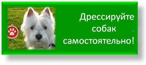"""Софья Баскина: """"Мне интересна личность животного"""" - фото -собак-самостоятельно-лекции, главная Интервью Поведение лошади , конный журнал EquiLIfe"""