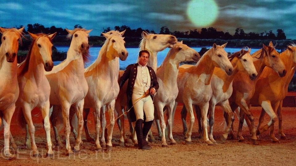 """Lorenzo: """"Я знаю, что могу еще лучше"""" - фото 01-копия_wm, главная Интервью , конный журнал EquiLIfe"""