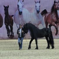 EQUITANA 2015: в лицах и стендах - фото IMG_7618_новый-размер_wm-200x200, главная Разное События Фото , конный журнал EquiLIfe