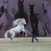 EQUITANA 2015: в лицах и стендах - фото IMG_7694_новый-размер_wm-200x200, главная Разное События Фото , конный журнал EquiLIfe
