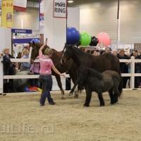EQUITANA 2015: в лицах и стендах - фото IMG_8422_новый-размер_wm-200x200, главная Разное События Фото , конный журнал EquiLIfe