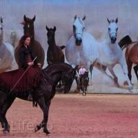 EQUITANA 2015: в лицах и стендах - фото IMG_8562_новый-размер_wm-200x200, главная Разное События Фото , конный журнал EquiLIfe