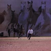 EQUITANA 2015: в лицах и стендах - фото IMG_8587_новый-размер_wm-200x200, главная Разное События Фото , конный журнал EquiLIfe
