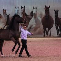 EQUITANA 2015: в лицах и стендах - фото IMG_8605_новый-размер_wm-200x200, главная Разное События Фото , конный журнал EquiLIfe