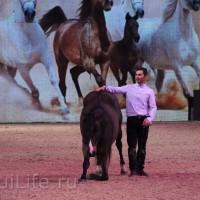 EQUITANA 2015: в лицах и стендах - фото IMG_8615_новый-размер_wm-200x200, главная Разное События Фото , конный журнал EquiLIfe