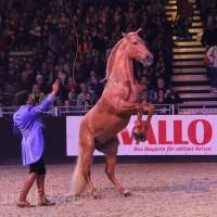 EQUITANA 2015: в лицах и стендах - фото IMG_8803_новый-размер_wm-200x200, главная Разное События Фото , конный журнал EquiLIfe