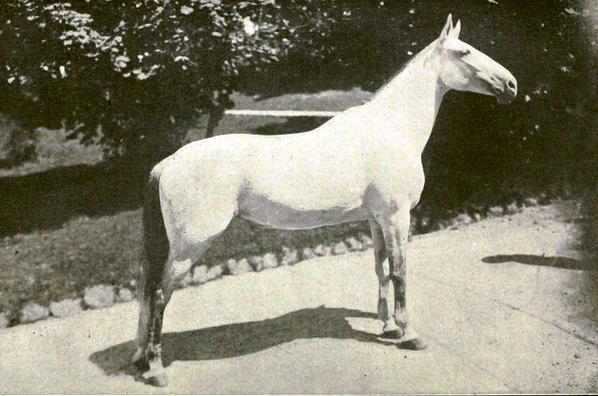 История Принцессы Трикси - королевы всех учёных лошадей - фото 11, главная Разное Тренинг , конный журнал EquiLIfe