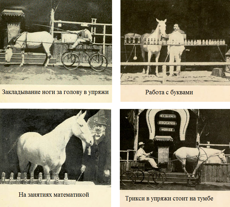 История Принцессы Трикси - королевы всех учёных лошадей - фото 13, главная Разное Тренинг , конный журнал EquiLIfe